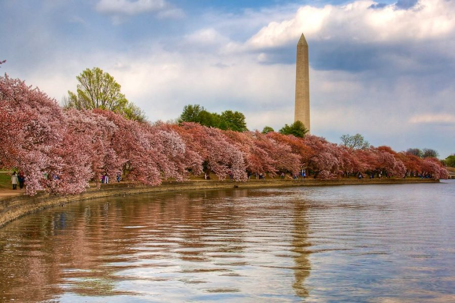 Washington, D.C. and the Washington Monument during the Cherry Blossom Festival.